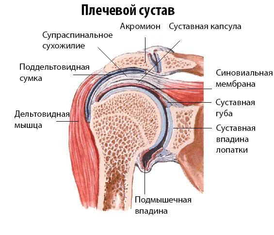 Отложение солей кальция в суставных сумках артроз тазобедренного сустава 2 степени лечение народные средства